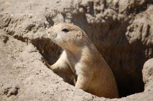 Long Campaigns, Story Arcs, and Being the Prairie Dog