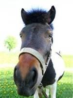 906242_donkey