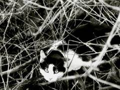 1374886_cat